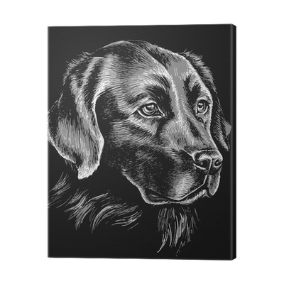Black And White Labrador Sketch Canvas Print Pixers We Live To Change