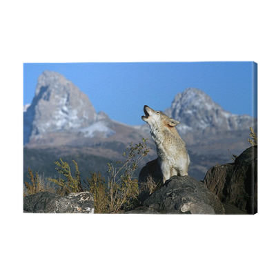 Call Of The Wild Canvas Print Pixers We Live To Change