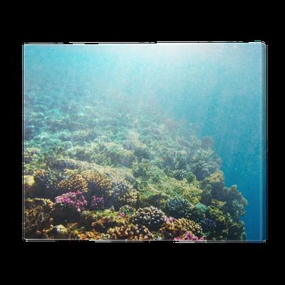 enorme korting nieuwe foto's groothandelaar Coral reef Canvas Print • Pixers® • We live to change