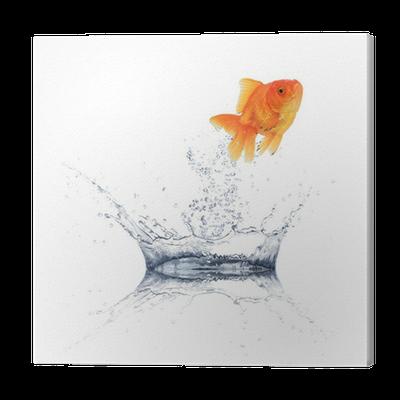 Golden fish jum...