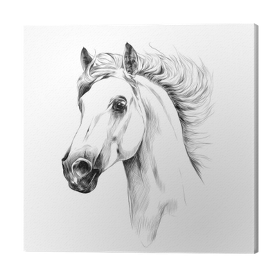 Horse Head Profile Sketch Vector Graphics Canvas Print Pixers We Live To Change