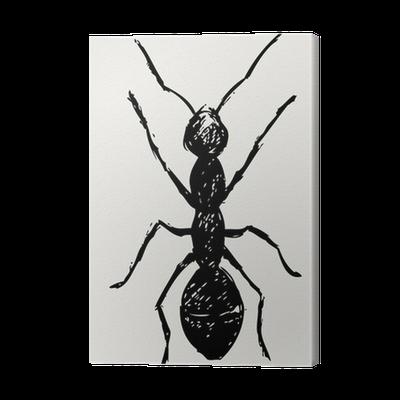 Portrait Of Ant Sketch Canvas Print Pixers We Live To Change