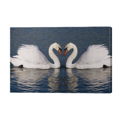 Retro Photograph Of Swans Hearts Symbol Of Everlasting Love Canvas