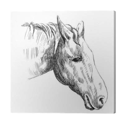 Vector Sketch Of A Horse S Head Hand Drawn Illustration Canvas Print Pixers We Live To Change