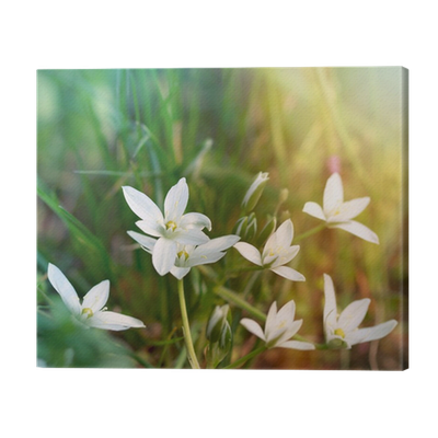 White meadow flowers canvas print pixers we live to change mightylinksfo