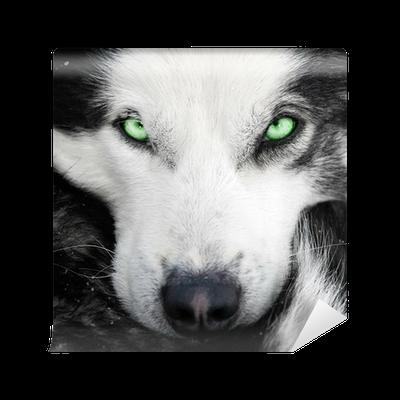 Carta da parati cane husky con gli occhi verdi pixers - Husky con occhi diversi ...