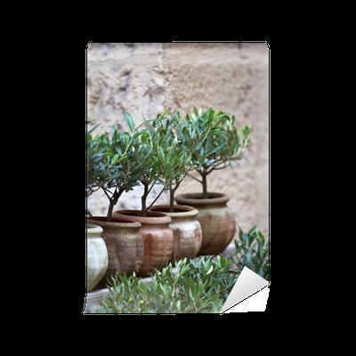 Boom In Pot Tuin.Fotobehang Olijfolie Plant Middellandse Zee Ten Zuiden Boom Tuin Pot Pixers We Leven Om Te Veranderen