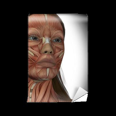 Fotomural Los músculos faciales de una mujer • Pixers® - Vivimos ...