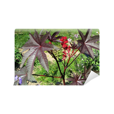 Fotomural Nombrado Planta De Ricino Pixers Vivimos Para Cambiar