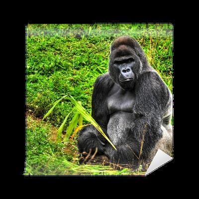 f18751238ed24 Fototapete Ein HDR-Bild von einem männlichen Gorilla Silberrücken • Pixers®  - Wir leben
