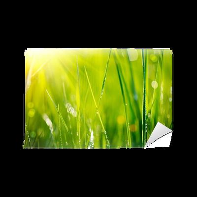 Fototapete frisches gras mit tau tropfen nahaufnahme weichzeichner pixers wir leben um zu - Fliesenaufkleber gras ...