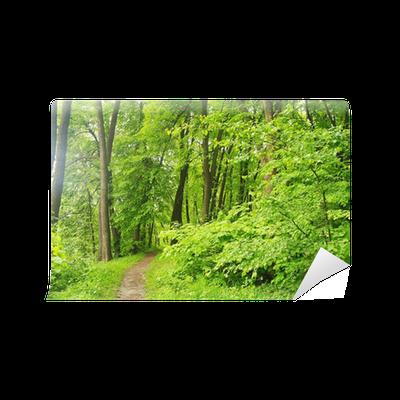 Fototapete fr hling natur park mit gr nem gras und b ume pixers wir leben um zu ver ndern - Fliesenaufkleber gras ...