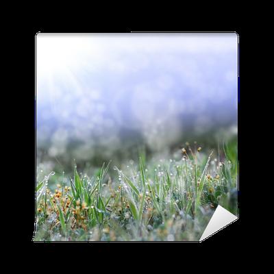 Fototapete gr ne gras mit den dachschr gen pixers wir leben um zu ver ndern - Fliesenaufkleber gras ...