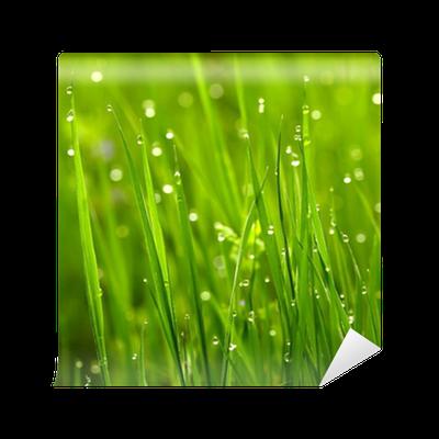Fototapete gr nes gras mit wassertropfen pixers wir leben um zu ver ndern - Fliesenaufkleber gras ...
