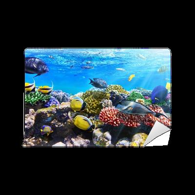 Fototapete korallen und fische im roten meer gypten - Fliesenaufkleber fische ...