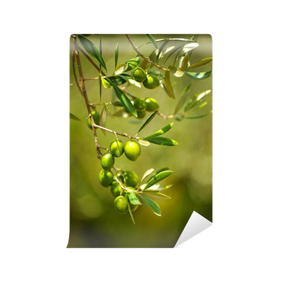 fototapete olivenbaum mit oliven pixers wir leben um zu ver ndern. Black Bedroom Furniture Sets. Home Design Ideas