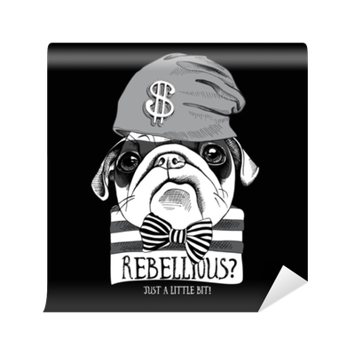 1a60a3a393284e Fototapete Porträt eines lustigen Mops in einer Banditenmaske ...