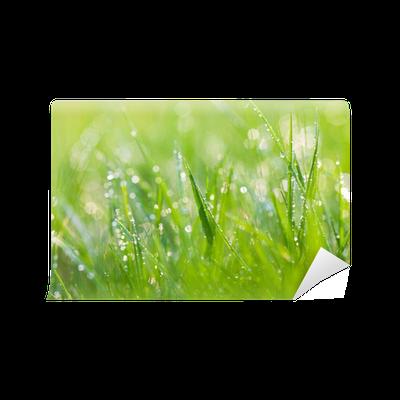 Fototapete sekt gras pixers wir leben um zu ver ndern - Fliesenaufkleber gras ...