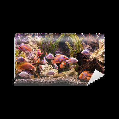 fototapete ttropical s wasseraquarium mit fischen pixers wir leben um zu ver ndern. Black Bedroom Furniture Sets. Home Design Ideas