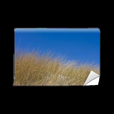 Fototapete verdorrte gras in den sandd nen der n he der ostsee pixers wir leben um zu - Fliesenaufkleber gras ...