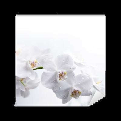 fototapete wei e orchidee auf dem wasser pixers wir. Black Bedroom Furniture Sets. Home Design Ideas
