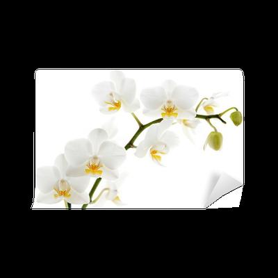 fototapete wei e orchidee isoliert auf wei em pixers. Black Bedroom Furniture Sets. Home Design Ideas