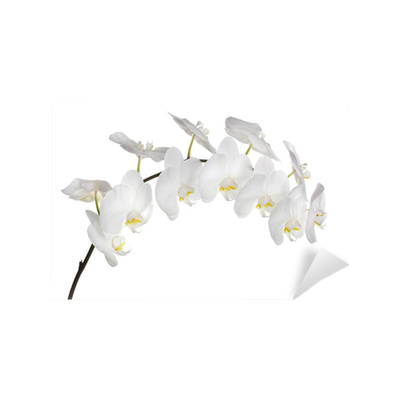 fototapete wei e orchidee pixers wir leben um zu. Black Bedroom Furniture Sets. Home Design Ideas