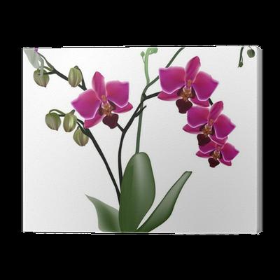 leinwandbild dunkel rosa orchidee zweig mit vier blumen pixers wir leben um zu ver ndern. Black Bedroom Furniture Sets. Home Design Ideas