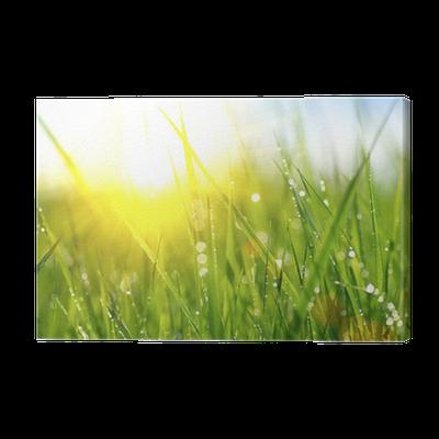 Leinwandbild gras frische gr ne fr hlingsgras mit tautropfen nahaufnahme pixers wir leben - Fliesenaufkleber gras ...
