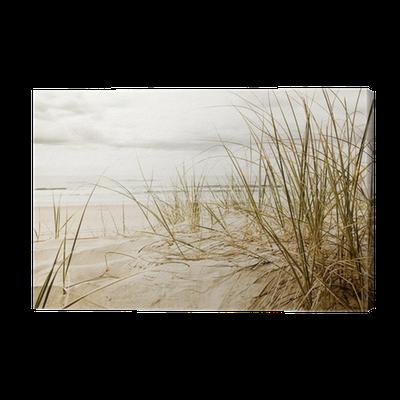 leinwandbild hohe gr ser am strand in der nahaufnahme. Black Bedroom Furniture Sets. Home Design Ideas