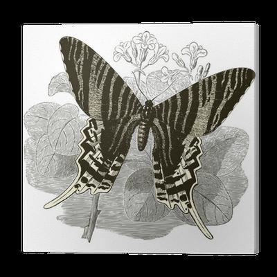 leinwandbild vintage butterfly pixers wir leben um. Black Bedroom Furniture Sets. Home Design Ideas
