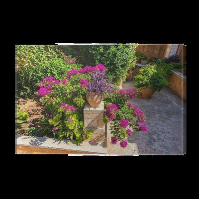leinwandbild zweige der blumen rosa bougainvillea busch auf kreta pixers wir leben um zu. Black Bedroom Furniture Sets. Home Design Ideas