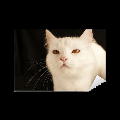 Naklejka Biały Kot Perski Pixers żyjemy By Zmieniać