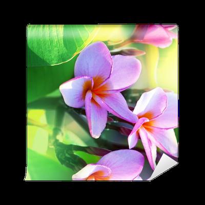 Papier Peint Fleurs Hawaienne Pixers Nous Vivons Pour Changer
