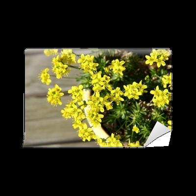 papier peint petites fleurs jaunes au printemps dans un pot sur fond de bois pixers nous. Black Bedroom Furniture Sets. Home Design Ideas