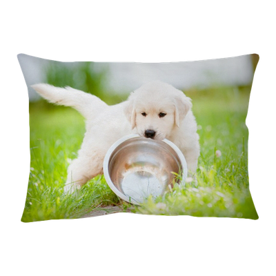 Golden Retriever Puppy Carrying A Bowl Pillow Cover Pixers We Live To Change