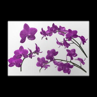 Wunderbar Poster Dunkellila Sammlung Orchideenblüten Isoliert Auf Weiß U2022 Pixers®    Wir Leben, Um Zu Verändern