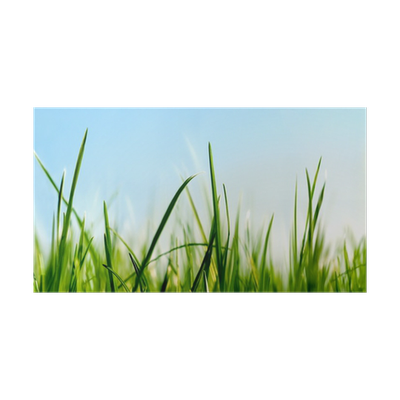 Poster gras in der n he des boden ansicht pixers wir leben um zu ver ndern - Fliesenaufkleber gras ...