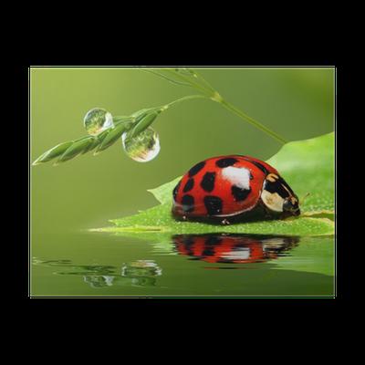 Poster ladybug entlang der gr nen nassen gras pixers wir leben um zu ver ndern - Fliesenaufkleber gras ...