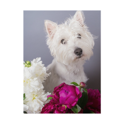 Cute Small White Dog With Flowers Poster Pixers We Live To Change