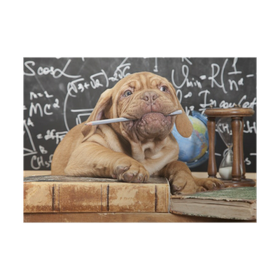 French Mastiff Puppy Chewing A Pencil Poster Pixers We Live To Change