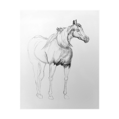 Horse Sketch Poster Pixers We Live To Change