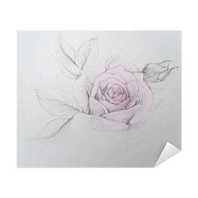 Rose Realistic Vector Sketch Of Flower Poster Pixers We Live To Change