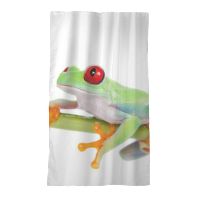 Beautiful Red Eyed Tree Frog On White Background Sheer
