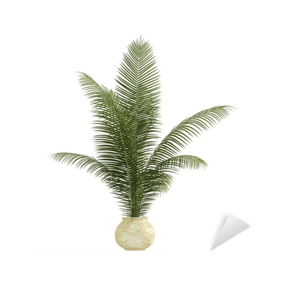 Areca palm houseplant Sticker • Pixers® • We live to change on palm christmas, palm rats, palm vector, palm chamaedorea seifrizii, palm shoot, palm bamboo, palm leaf chickee, palm roses, palm drawing, palm flowers, palm seeds, palm beetle, palm shrubs, palm bonsai, palm trees, palm leaf cut out, palm tr, palm diagram, palm pattern, palm border,
