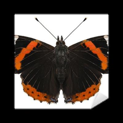 Butterfly species Vanessa atalanta Sticker • Pixers® • We ...