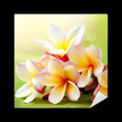 Frangipani tropical spa flower plumeria sticker • pixers • we live to change
