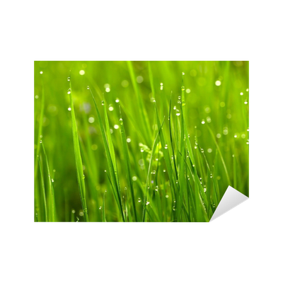 Green grass with waterdrops Sticker • Pixers® • We live to ...