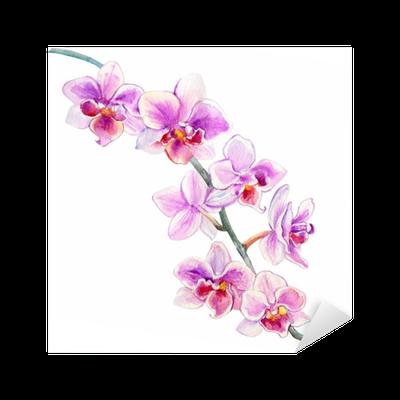 Sticker Illustration botanique dessiné main aquarelle fleurs d'orchidées isolé sur fond blanc ...