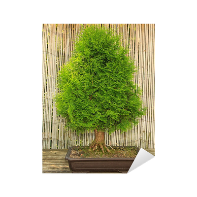 bonsai baum garten, japanischer garten bonsai baum sticker • pixers® • we live to change, Design ideen